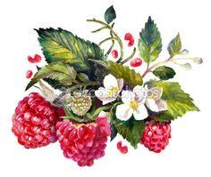 Akwarela, rysunek maliny, jagody Artystyczny painting, ilustracja — Obraz stockowy #111700224