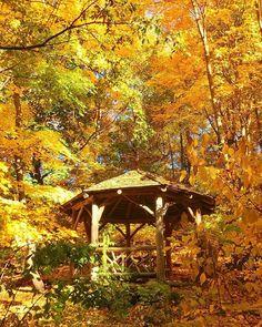 Autumn leaves at Wave Hill by Daisuke Chihara  #autumn #autumnleaves #autumncolors #autumninnewyork #fall #fallcolors #wavehill #Bronx #newyork #nyc #newyorkcity #cityscape