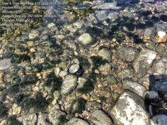 Muestreo ríos asturianos con cámaras subacuáticas.