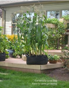 Scaled-down mini-vegetables are a new solution for small-space gardening.