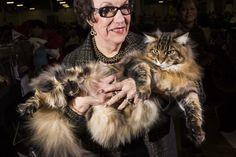 Hello, Kitties! Scenes from the CFA World Championship Cat Show – Vogue