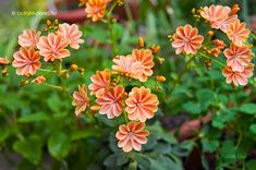 Succulents, Home And Garden, Spring, Flowers, Plants, Beautiful Roses, Pastel, Gardening, Decor