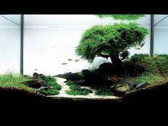 2007 International Aquatic Plant Layout Contest  #10 Place Winner  aquarium landscape with a underwater bonsai