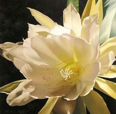 Brian DAvis floral paintings - Google Search