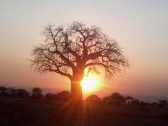Sunset, Tarangire National Park, Tanzania