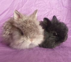 Cutest and Most Popular Breeds of Rabbits As Pets  Pet love