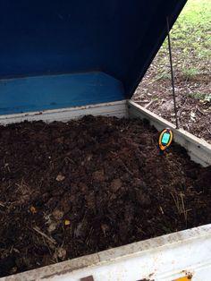 Red worm in horse manure lombrichi rossi nel letame - Compost casalingo ...