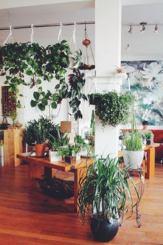 blooms + plants   olla urban flower project, vancouver, bc - via angela grayce