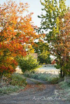♥ Fyra årstider - mitt liv på landet