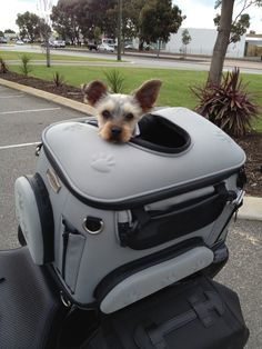 My first ride on my mum's motorbike in my new pet carrier - it was so much fun!!
