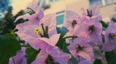 #vsco #vscocam #türk #repin #çiçek #flower #pink