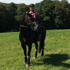 Our Stallion after the training session last Weekend horsecenteraustria…