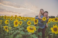 Barbara O Photography -Engagement session at sunflower field, maryland