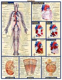 Chart Human Body Anatomy Fabric Poster 32 X 24 17 13