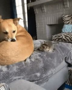 Eye contact is enough - your daily dose of funny cats - cute kittens - pet memes - pets in clothes - kitty breeds - sweet animal pictures - perfect photos for cat moms Funny Animal Videos, Cute Funny Animals, Animal Memes, Cute Baby Animals, Funny Cute, Animals And Pets, Cute Cats, Super Funny, Funny Videos