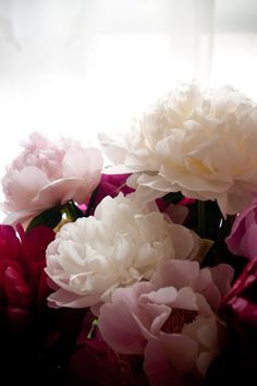Peonies - forever love these gorgeous flowers, reminding me of my grandmother everyday!