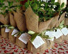Mudas de ervas aromáticas e temperos