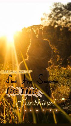 My story idea, Norway Pet Life, Story Ideas, Norway, Sunshine, Sunset, Pets, Movies, Movie Posters, Beautiful
