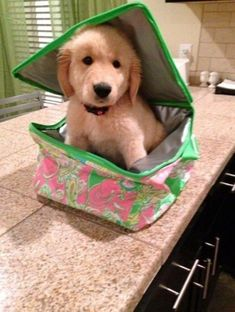 Let me come to school with you! | Community Post: 60 Times Golden Retrievers Were So Adorable You Wanted To Cry
