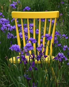 Put old yellow chair in green house for vines to grown on/