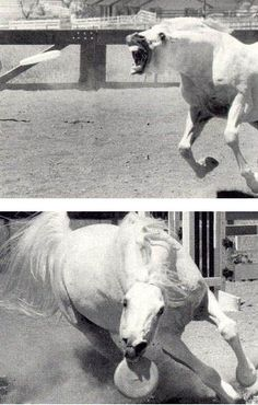 A horse playing frisbee. Win