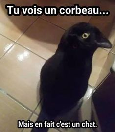 Funny animal pictures of the day. Here is the collection of top 28 latest really funny animal memes pictures that will make you LOL every time. Funny Animal Memes, Funny Animal Pictures, Cat Memes, Dog Pictures, Funny Animals, Funny Jokes, Cute Animals, Animal Quotes, Really Funny