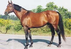 Gun Power(1997)Unbridled- Miss Power Puff By Lines Of Power. 3x4 To Raise A Native, 4x4 To Bold Ruler, 5x5 To Aspidistra & Nashua. Unraced. Standing In Mich For 2016.