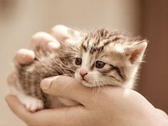omg...what an adorable tiny kitten!!!!