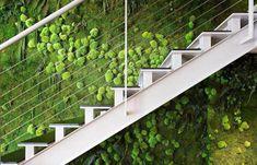 Best Green Wall Systems in UAE | Preserved Moss Wall in Dubai, UAE