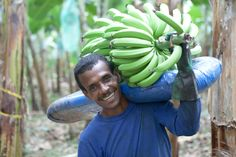 When you buy Fairtrade bananas, avocados or fresh produce, it means producers are paid at least the Fairtrade Minimum Price which they can invest in their communities. Fair Trade, Bananas, Bond, Avocado, Fair Trade Fashion, Banana