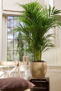 grote kamerplanten - Google Search