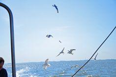 Seagulls//Möwen