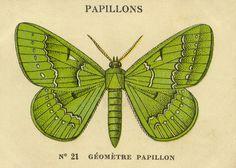 n21 papillons | Flickr: Intercambio de fotos