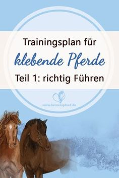 """Klebendes Pferd: Trainingsplan für Pferde mit """"Trennungsangst"""" – Teil 1: Richtig Führen"""