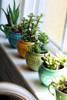succulents also are a great way to liven up a sunny window sill. (I have a succulent but I also start my seedlings for my outside herb garden on the window sill and transplant them later. Love the green year round!