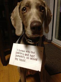 Dog shaming-haha!! My dog loves doing this!