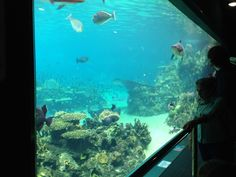 Shark Bay at Sea World on the Gold Coast in Queensland, Australia Queensland Australia, Sea World, Gold Coast, Brisbane, Family Travel, Shark, Things To Do, Places, Blog