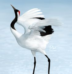 Red-crowned Crane by Sword-Dance.deviantart.com on @DeviantArt