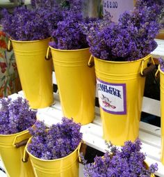 For @Carla Olson Gade -- fresh-cut lavender in sunny-yellow buckets to say thank you for brightening my day!