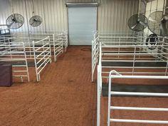 Show Cattle Barn