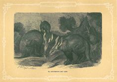 1883  Aardvark Antique Art Print  Brehm Natural by CarambasVintage, $16.00