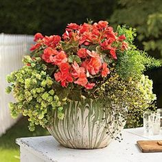 Handcrafted Garden Container Centerpiece | To complement the green-and-white glaze of the vintage Ozark tourist pottery, we combined 'Solenia Salmon Coral' begonia with 'Kent Beauty' ornamental oregano, asparagus fern, and angel vine. | SouthernLiving.com