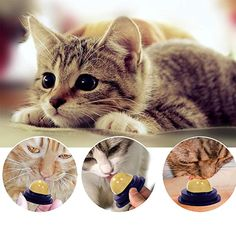 Catnip Gel Candy Toy with Cover - Nutritional Fish Flavored Catnip Toy for Cats