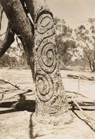Carved trees Gamilaroi Country Bora Ground at Banaway near Mogil Mogil NSW photographed by RL Black Aboriginal Symbols, Aboriginal Language, Aboriginal Dreamtime, Aboriginal Culture, Aboriginal People, Aboriginal Painting, Australian Aboriginal History, Australian Art, Kunst Der Aborigines