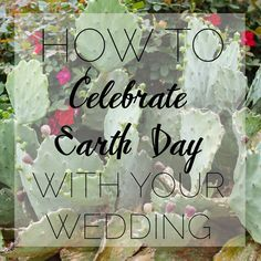 What to do with my weddnig flowers afterwards??  Happy Earth Day   Repeat Roses — Smith House Photography