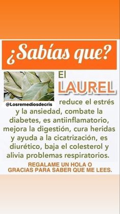 Diabetes, Herbs, Natural, Instagram, Heal Bruises, Bay Leaves, Reduce Stress, Smoothie, Fat