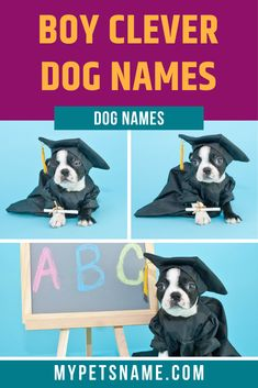 """There are multiple avenues that you could explore when looking for a suitable name for your boy dog. We would recommend looking to other languages and finding names that inherently mean """"wise"""" or """"clever"""". Find more such boy clever dog names in our list here.  #cleverdognames #boycleverdognames #dognames Male Pet Names, Boy Dog Names, Clever Dog Names, Samoyed, Dog Owners, Languages, Author, Explore, Pets"""