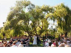 "Cline Cellars, Sonoma Valley - ceremony under ""tree of life"""