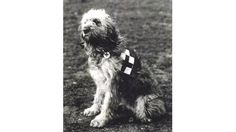 Dog were trained to find wounded or dying soldiers on the battlefield in world war one. #Wellturn #Training #Dogs #Love #Dedication