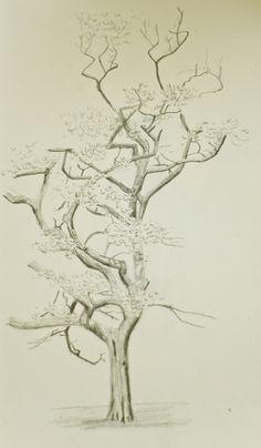 Beautiful Drawings of Trees